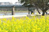武庫川公園(武庫川河川敷緑地)